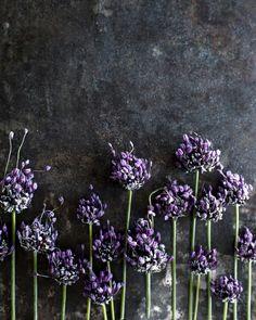 purple flowers ...