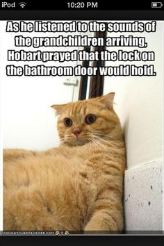 I bet all cats in that situation feel like that