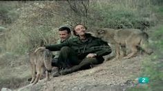 Felix Rodriguez de la Fuente he loved wolves and he show the spanish how to loved them.
