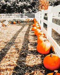 Pop Culture Halloween Costume, Creative Halloween Costumes, Outside Fall Decorations, Pumpkin Farm, Pumpkin Spice, Autumn Cozy, Painted Pumpkins, Painting For Kids, Fall Halloween