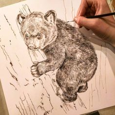 A new black bear cub painting - unwinding from recent travels with some fur texture today - Tree Hugger Black Bear Cub sepia watercolor underpainting on board Rebecca Latham  Hope you enjoy! ..share if you like.  #wildlife #watercolor #art #animals #painting #miniature #nofilter #artist #miniatureart #realism #animallovers #bear #blackbear #americanblackbear #cub #fineart #wildlifeart #naturalism  #picture #artsy #instaart #gallery #creative #instaartist #animal #instapaint #instapainting…