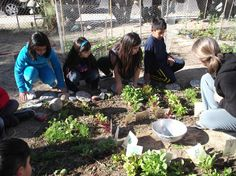 Second graders harvest winter crops from a sunken keyhole bed. We hope to dig more beds such as these to plant more greens and root vegetables this fall and winter.
