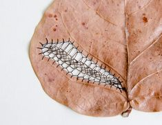 Delicacy Embroidery Leaf Art by Hillary Fayle Land Art, Textiles, Embroidered Leaves, Colossal Art, Thread Art, Cutwork, Embroidery Art, Embroidery Patterns, Textile Art