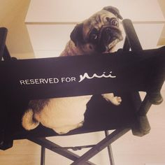 Getting a @MiiCosmeticsIrl #makeover today @rainforestspa. Sadie our #spapug x  @IMAGE_daily like our cutie?