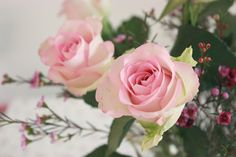 Decorating with Roses - Vintage Rose Brocante