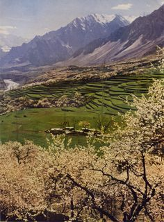 """Kodachrome by Jean and Franc Shor. From """"At World's End in Hunza,"""" National Geographic, October, 1953. """"This Lush Valley, Aglow with Blossoming Apricots, Is the Heart of Idyllic Hunza Contented villagers of this semi-independent kingdom near the..."""