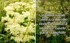 Arancini, Aspirin, Plant
