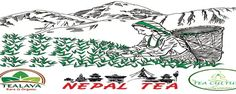 #FeaturedCompany Nepal Tea and Coffee Promotion Center  one of the well-established company sourcing high quality tea and coffee from the heart of the Himalayas. We offer extends from classic verities to specialist blends. We are one of the best #tea and #coffee #suppliers of #Nepal. We possess an experienced team of Tea #Experts and #Marketing Specialist.  http://goo.gl/SRWPxs