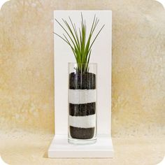 IOTA CHECKERS -  feng shui home decor, decorative accent, air plant, sand terrarium, feng shui gift. $90.00, via Etsy.
