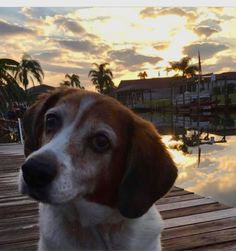 Heaven has gained another angel yesterday.  Beautiful Roxy crossed the rainbow bridge.  She had a wonderful 12 years with her family who loved her and will miss her.   She loved spending times on the boat and being near water.  Run free, Roxy and find the biggest boat out there to enjoy. 💕 #beagle #dogs #cats #necklaces #keychains #anklets #jewelry