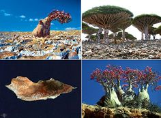 Socotra Islands : The Most Weird Place in World