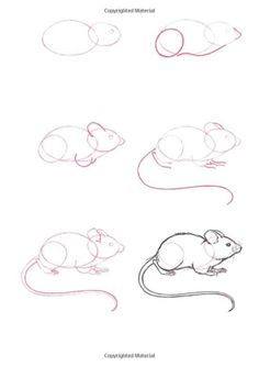 (2011-11) ... a mouse by adriana.b.o1