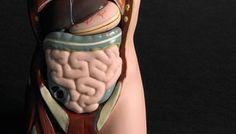 ¿El Magnesio puede mejorar la Fibromialgia?