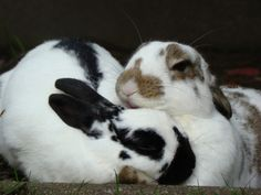 Bunny gets some grooming help from a friend - May 12, 2012