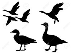 In 'V' formation | wild geese | Pinterest