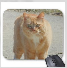 Cat Photo Mousepad - Basso the Cat - Mouse Pad