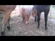 Takken voeren aan paarden | Natuurlijk Paarden