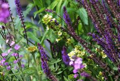Top 10 everlasting perennials - Living Colour Gardens