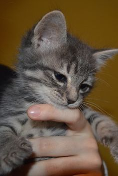 Kitty Ella