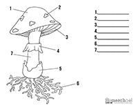 Free printable mushroom worksheets for coloring pages, label the mushroom, notebooking, and more! Print our FREE science worksheets from SuperstarWorksheets! Science Jokes, Science Biology, Science Activities, Science Experiments, Life Science Projects, Tapestry Of Grace, Science Clipart, Science Lesson Plans, Clip Art