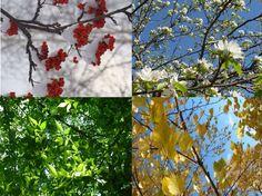 #Seasons #spring #season..PUSH and choose ...Image 1 of 15