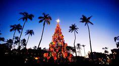 Christmas Traditions: Hawaiian Christmas Tree