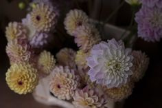 Monthly journal with updates from the Flower Studio and Farm, along with our Garden Series on special places gardens we have visited around the world. Flower Studio, Dahlias, Wedding Flowers, Around The Worlds, Garden, Plants, Garten, Lawn And Garden, Dahlia