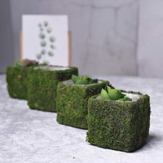 4 Pack – Square Preserved Moss Planter Boxes – Moss Covered Flower Basket Planter with Inner Lining – x - Modern Fake Plants, Small Plants, Succulent Plants, Planter Box Centerpiece, Green Wedding Decorations, Christmas Decorations, Square Planter Boxes, Moss Decor, Basket Planters