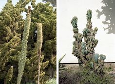 LA Drought Gardens | The Garden Edit