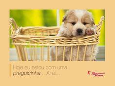 Hoje eu estou com uma preguicinha... Ai ai... #dogs #cute