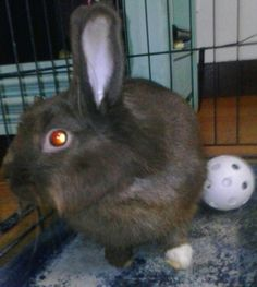 Meet Cocoa,  this bunny is now known as Doo Too, as Isis could not say Cocoa