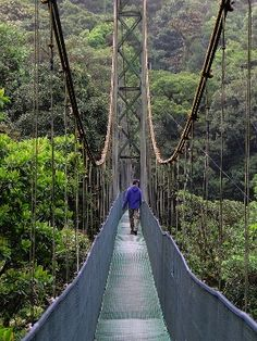 The cloud forest reserve encompasses an area of over 50,000 acres of rainforest land in conservation, making it the largest private reserve in all of Central America.