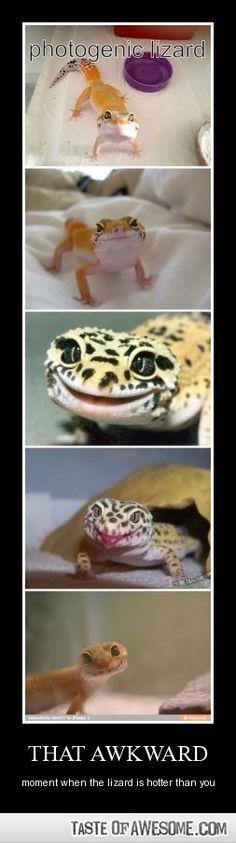 Photogenic lizard