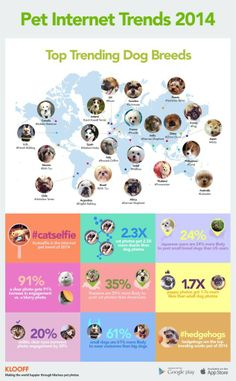 Infographic - Dog Breeds in Social Media / by Country - Golden Retrievers rule Canada!