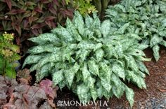 1000 images about zone 5a hardy perennials on pinterest - Vegetable garden zone 5a ...