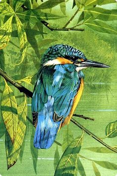 Kingfisher Black Pen Sketches, Animal Paintings, Bird Paintings, Kingfisher Bird, Bird Drawings, My Precious, Bird Art, Pet Birds, Painting & Drawing