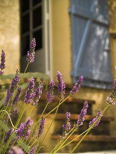 cestmoimomentsofinspiration: Via: lightandaperture.co.uk