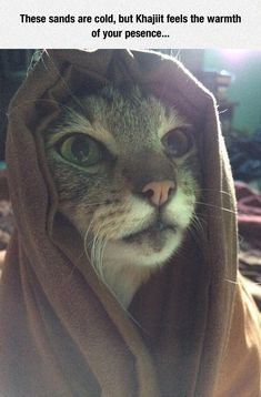 Khajiit Cat                                                                                                                                                     More