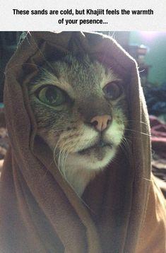 Khajiit Cat