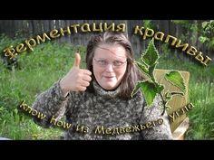 Ферментация крапивы know how из Медвежьего угла - YouTube