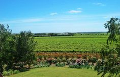 Love this view of the Mulberry Lodge gardens and vineyards beyond. Taken from the roof