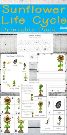 FREE printable sunflower life cycle worksheets - these are such a fun way for kids to learn about pl Free Preschool, Preschool Science, Kindergarten Worksheets, Worksheets For Kids, Science For Kids, Preschool Kindergarten, Sequencing Activities, Primary Science, Elementary Science