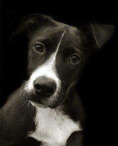 Heartbreakingly Beautiful Portraits of Shelter Dogs - Traer Scott