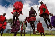 Дома у масаи строят в основном женщины. Они же во время переходов несут на спинах нехитрый скарб и каркасы хижин. А что делают мужчины?