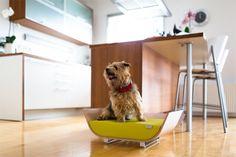 best pet design - Google Search