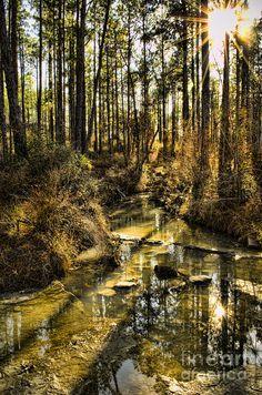 Longleaf Vista Trail, Kisatchie National Forest, Louisiana