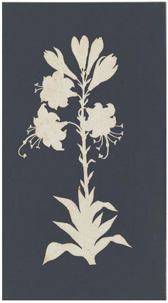 Philipp Otto Runge. Fire Lily. White Paper silhouette mounted on black paper. 500 mm. Hamburg Kunsthalle
