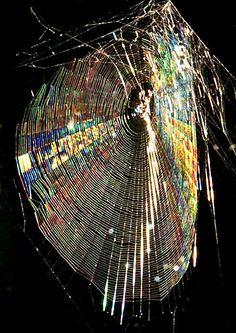 Rainbow metallic spiderweb. Glorious