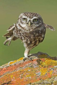 What are you looking at?  Haven't you seen an owl do Tai Chi before?