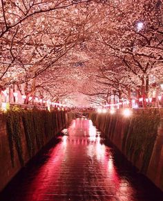 Cherry Blossom in Tokyo - Japan Picture by Good night all by wonderful_places Modern Landscape Design, Beach Landscape, Modern Landscaping, Fantasy Landscape, Landscape Drawings, Landscape Pictures, Landscape Illustration, Napoleon Hill, Landscape Photography